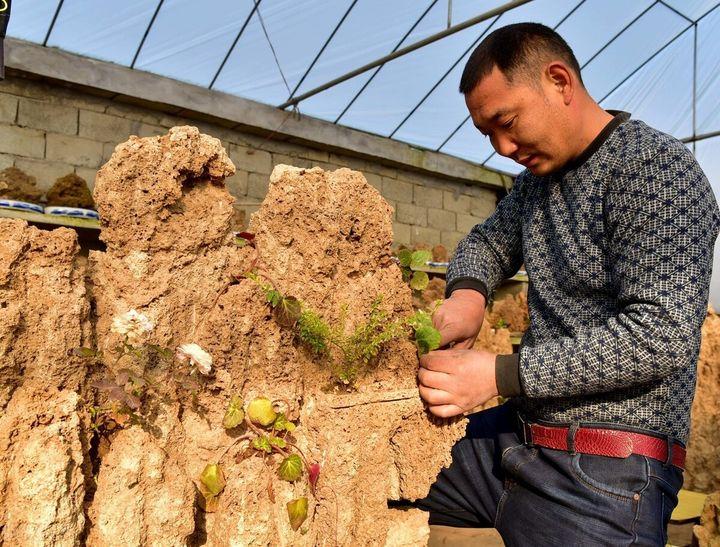 上水石种什么植物最好(上水石怎么养出苔藓)插图(2)