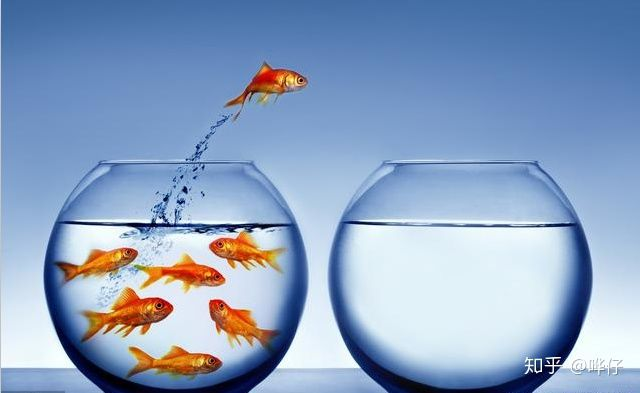 为什么金鱼刚回家就趴缸?你可能犯了天底下养鱼男人都会犯的错误(图3)