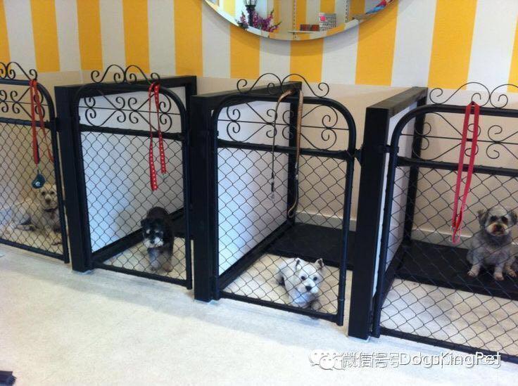 宠物美容店装修设计如何做到令人耳目一新? 知乎