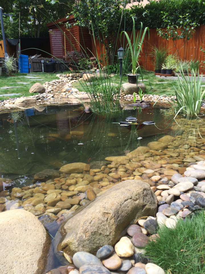 庭院建造池塘的造景过程【转自weibo:@马锐拉】插图(37)