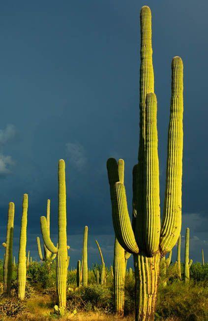 沙漠里有哪些奇特植物和动物?