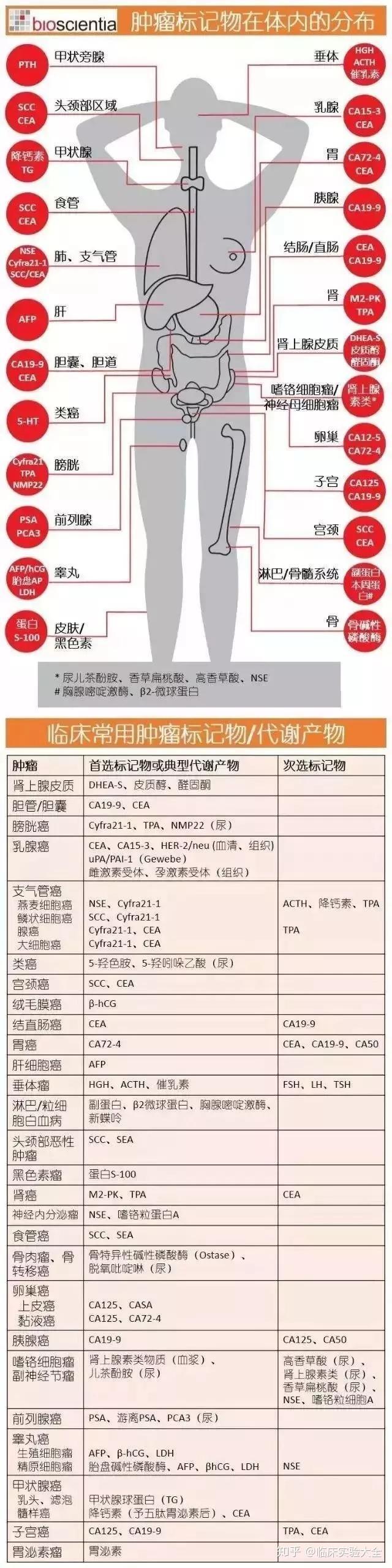 肿瘤标志物_十大肿瘤之常见肿瘤标志物分布图 - 知乎
