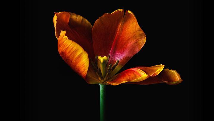 【S969】室内花卉静物微距摄影教程 KelbyOne -Melanie Kern-Favilla