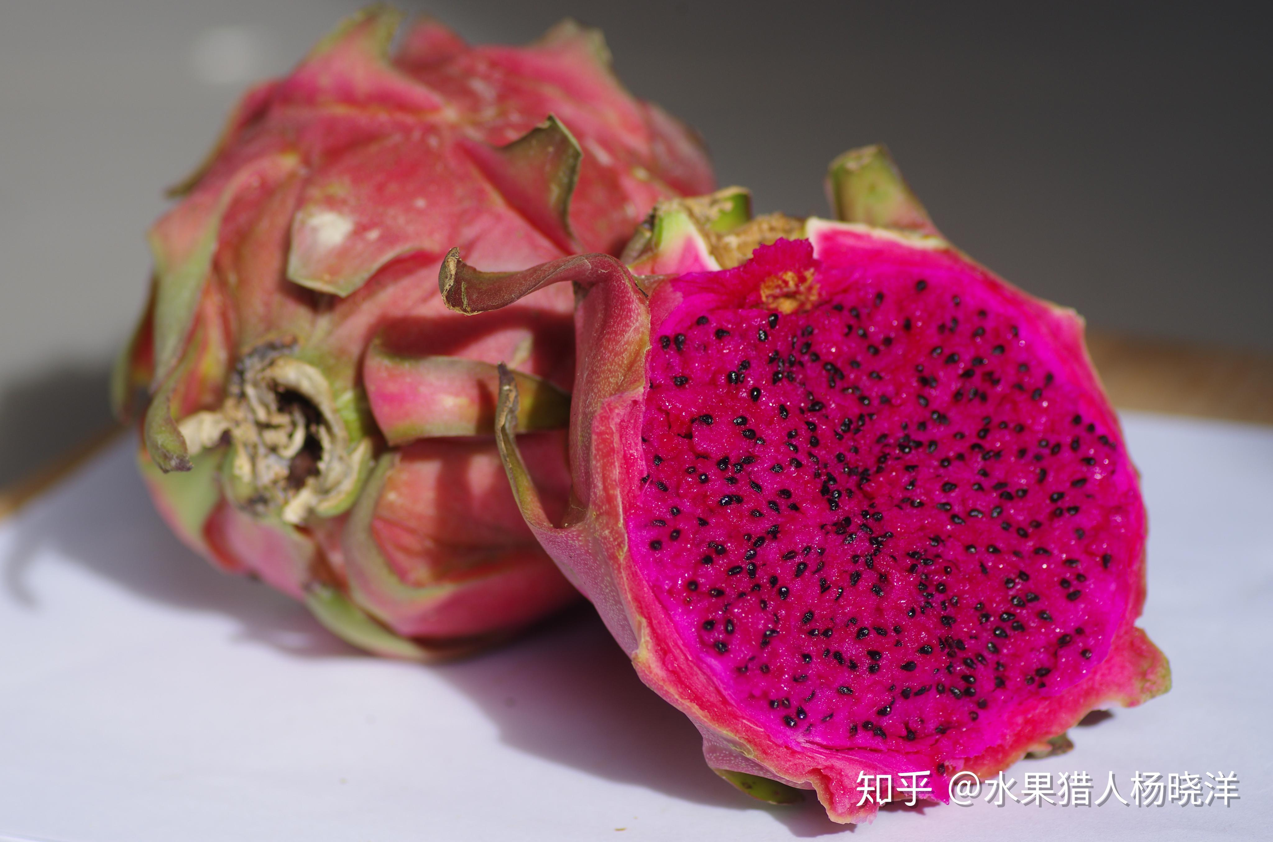 仙人掌果和火龙果_火龙果是仙人掌的果子吗? - 知乎