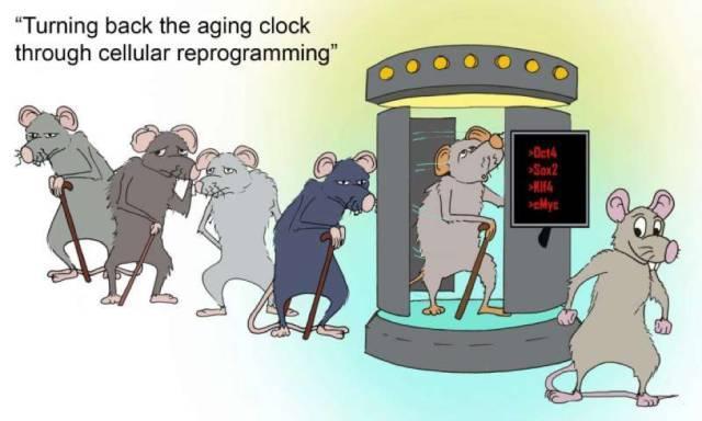 """重磅 人类首次通过""""细胞重编程""""实现了返老还童"""