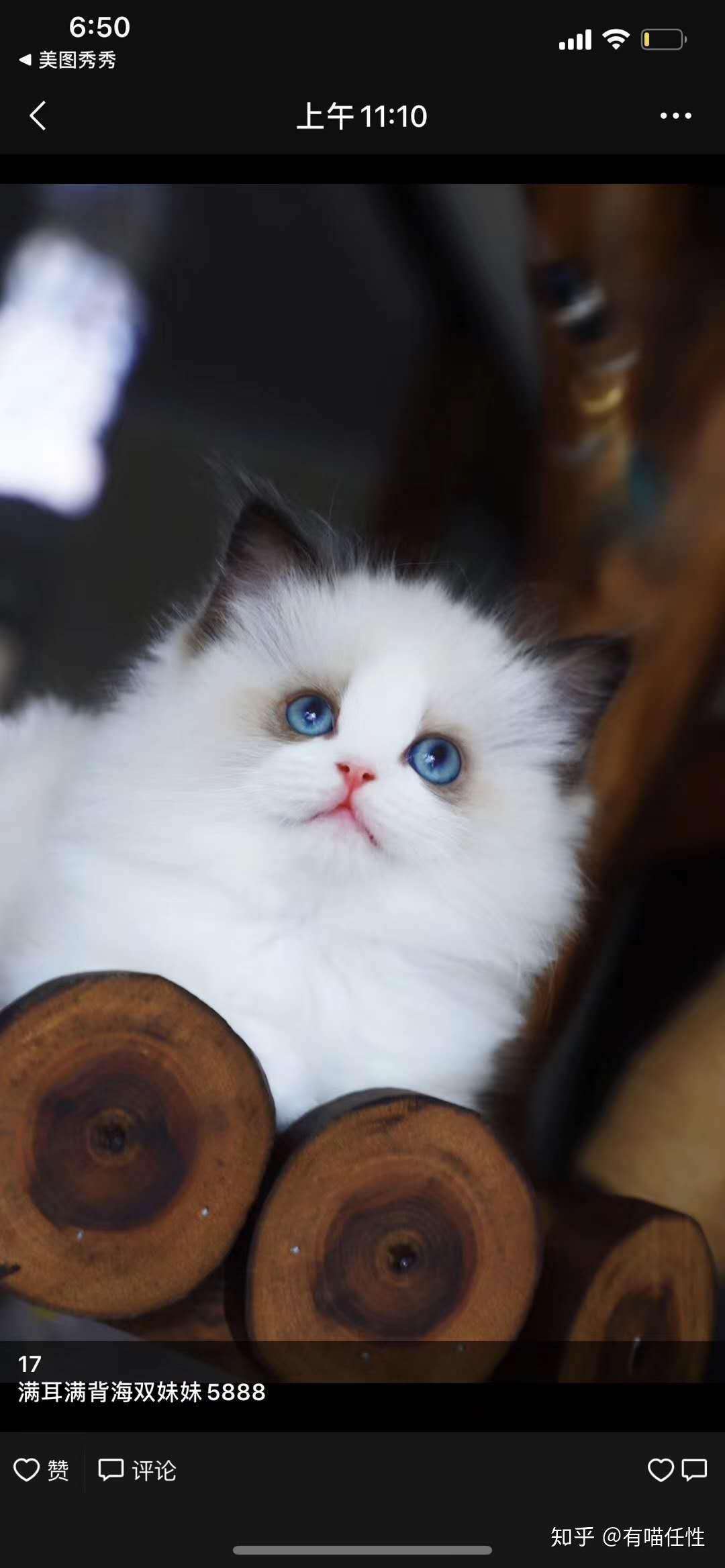 色请图片_布偶猫的价格一般是多少钱一只? - 知乎