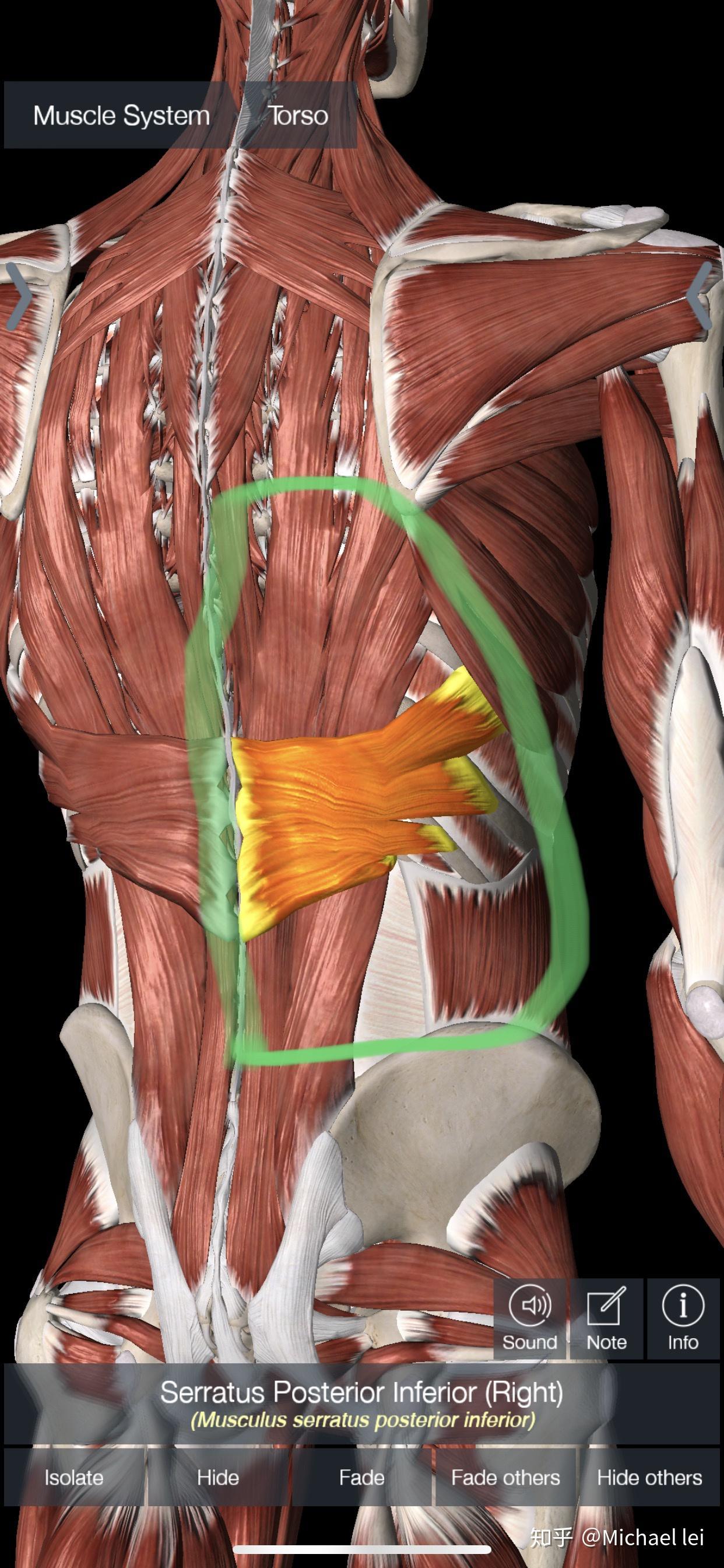 背部肌肉分布_腰(背)肌筋膜炎七天解除方法-知乎