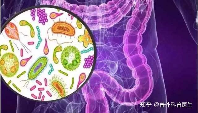 我们需要每天补充益生菌吗?医生会告诉你答案