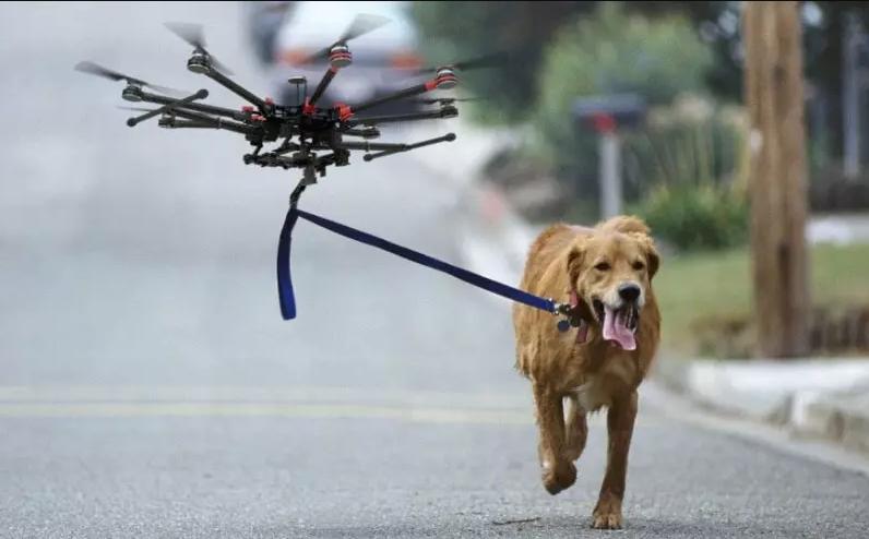 自动遛狗装置迷思