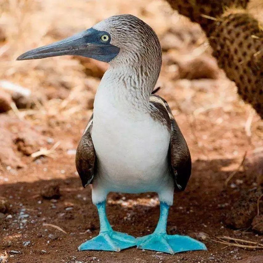 生物学圣地:加拉帕戈斯群岛--进化论诞生之地- 知乎