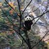 大熊猫在知乎
