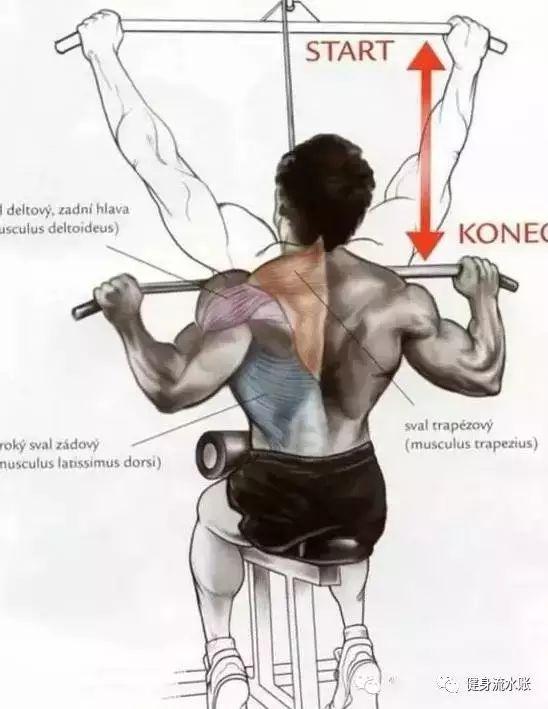 背阔肌_背部训练——健身房篇-知乎