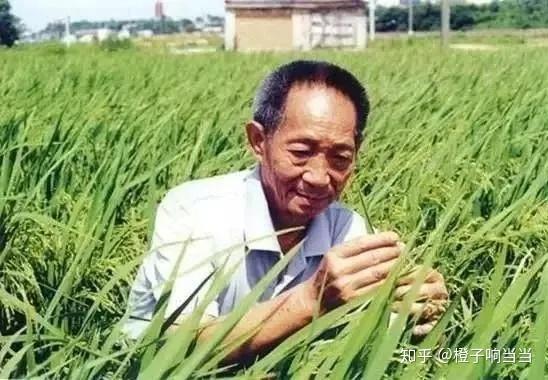 澳洲幸运10 袁隆平的杂交水稻你吃过吗?为什么说他养