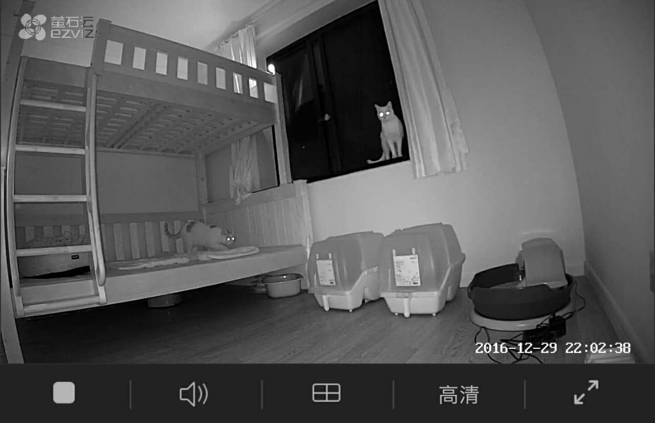 如何搭建3-7天自助养猫系统?——我的设备与经验分享