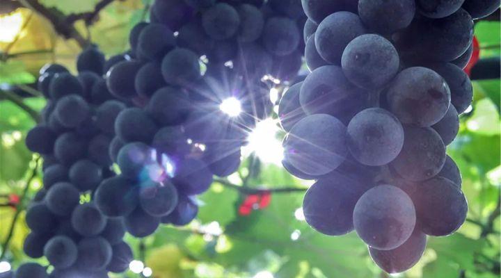 常见的水果有哪些冷知识?你知道吗