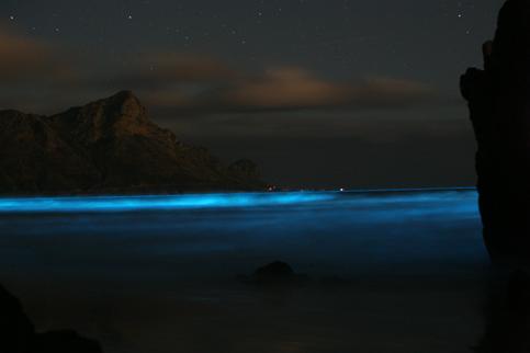 摄影师拍到的「发蓝光」海豚群是怎么回事?