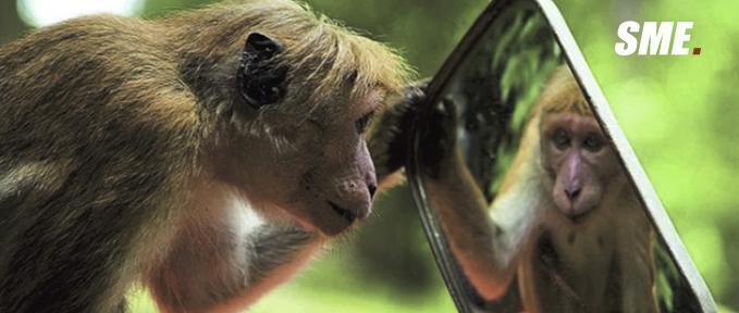 会照镜子的就是高等动物?蚂蚁和隆头鱼表示非常赞同