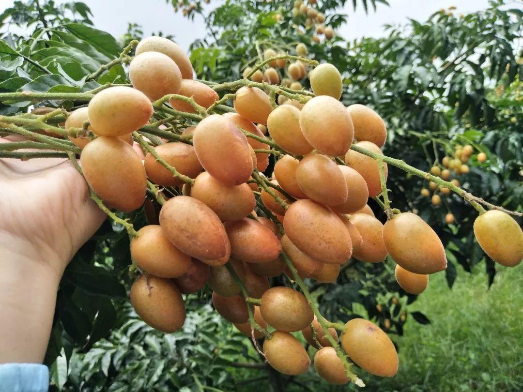 黄色皮肤水果蜂蜜多长时间?