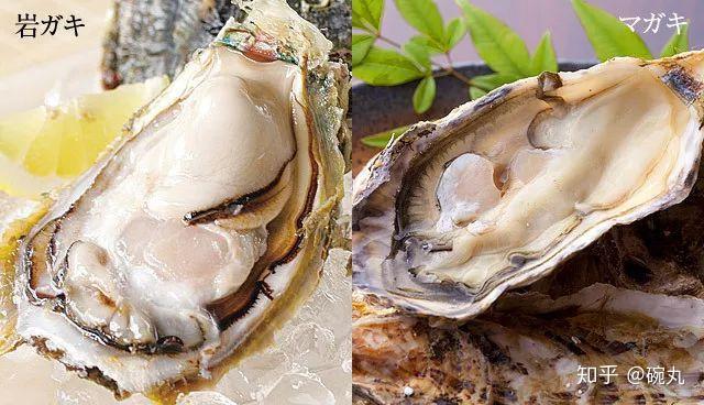 夏輝 牡蠣
