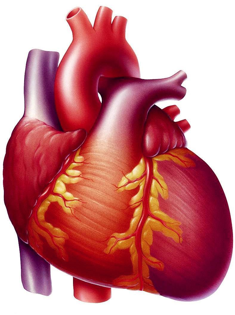 心衰细胞名词解释?