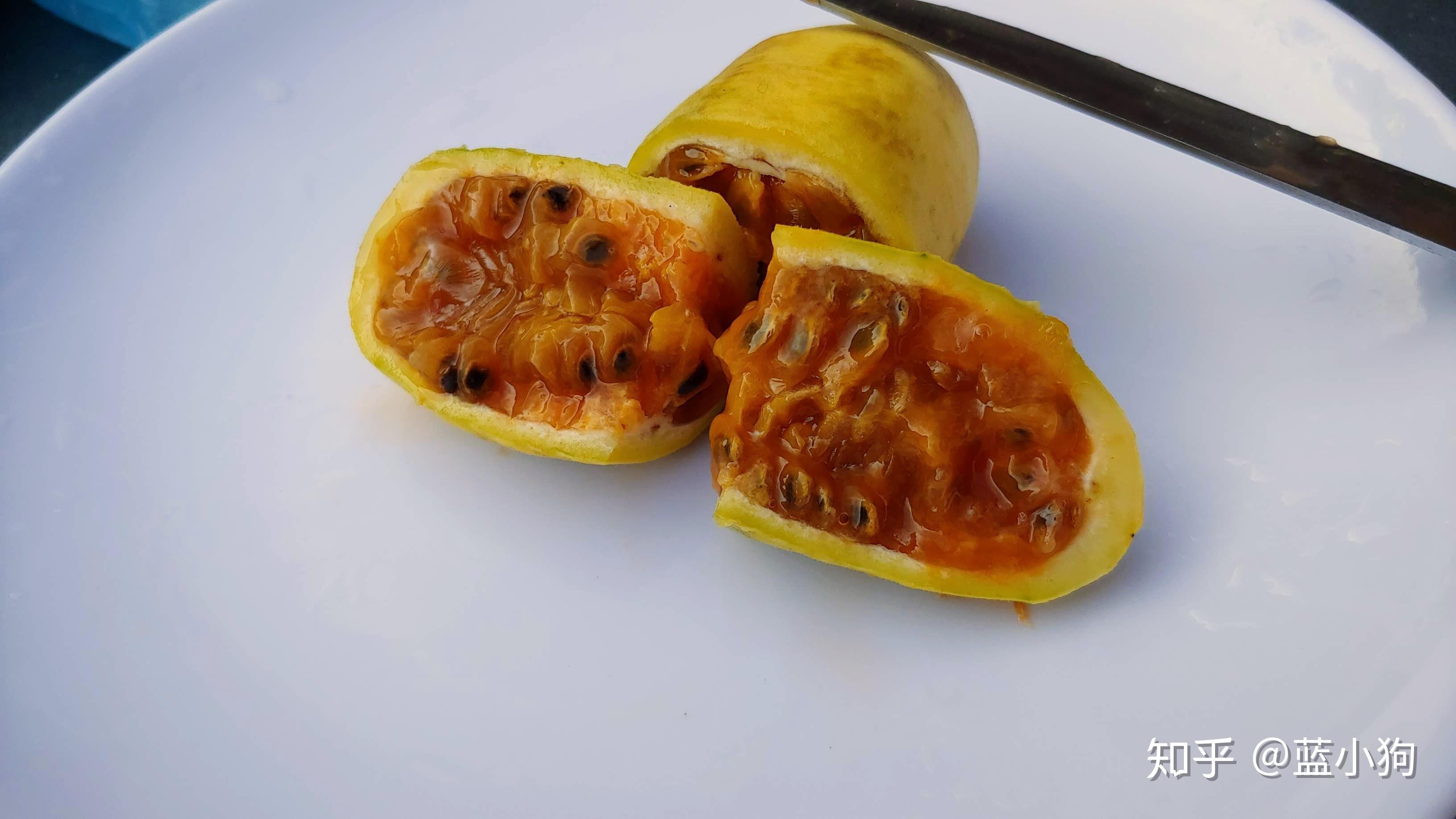 水果品种大全名字 100种水果名称_三氪网