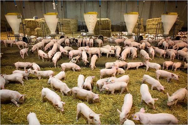 论新世代养殖业的主流先锋产品—微生物发酵饲料