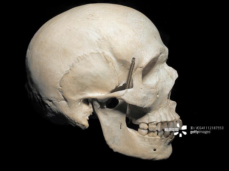 国内资讯_人类进化一共用了多少年?_国内资讯_热血网