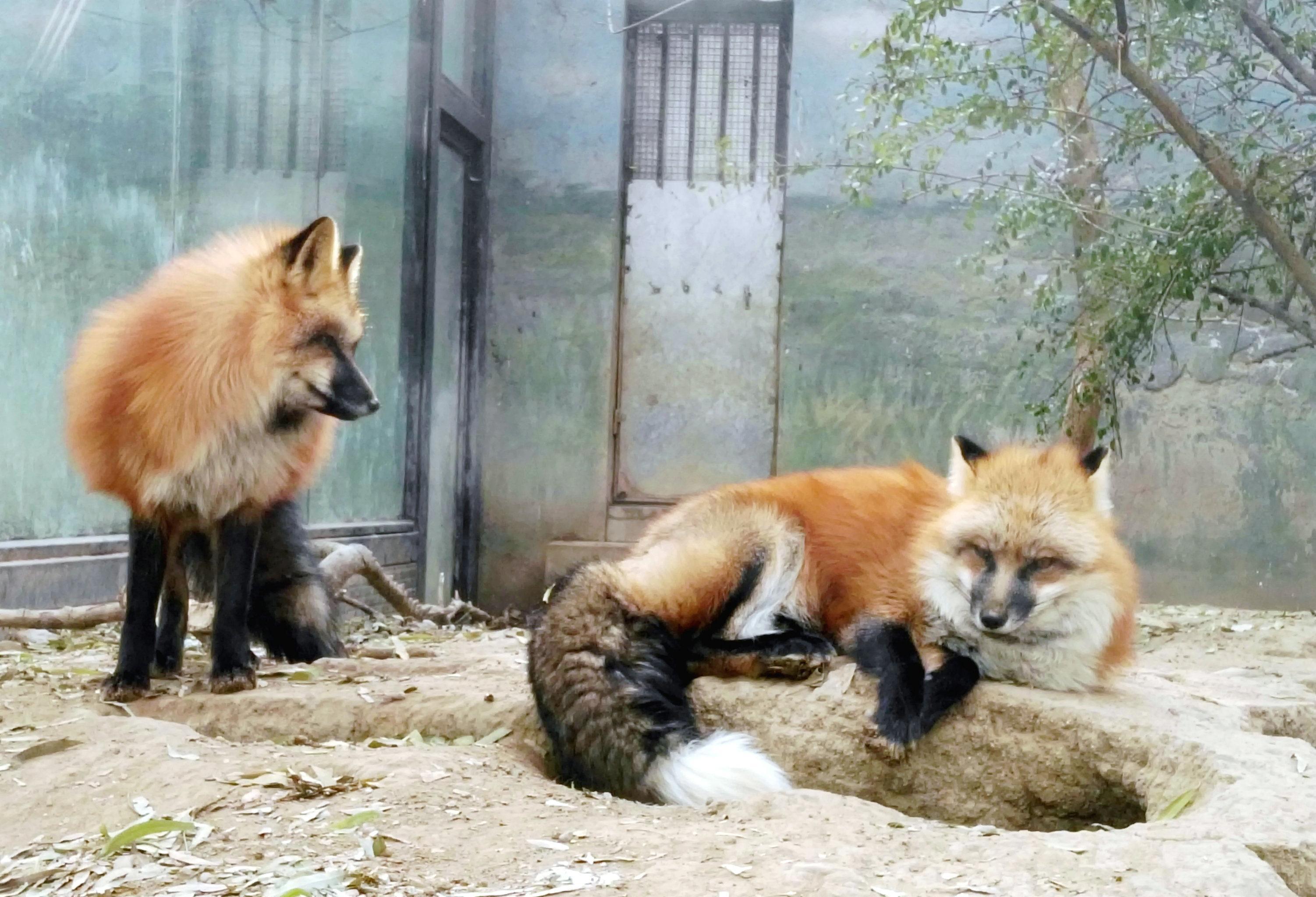 """动物性较大全狗_狗年说""""狗"""":走进北京动物园(之二)——犬科动物展区-知乎"""