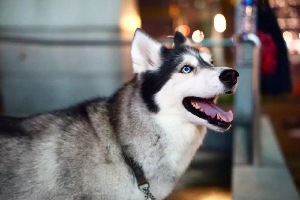 动物性较大全狗_有想过为什么狗狗喜欢当跟屁虫吗?除了忠诚这才是狗狗们的