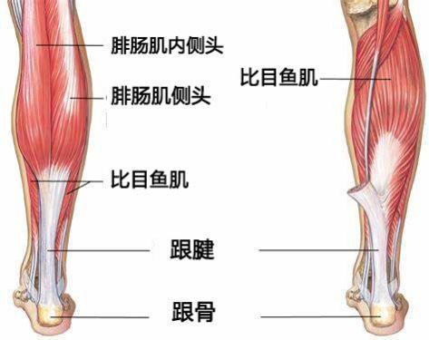 瘦小腿_有什么瘦腿的好法子吗? - 知乎