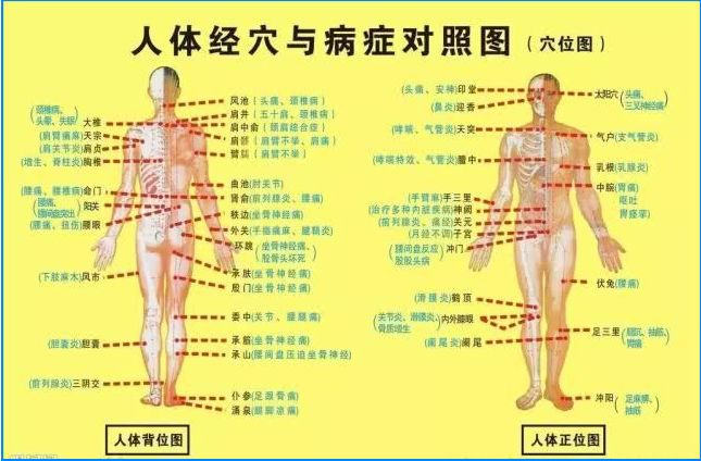 人体肌肉_《40个常见病穴位按摩大全》送给你,超百万人已收 - 知乎