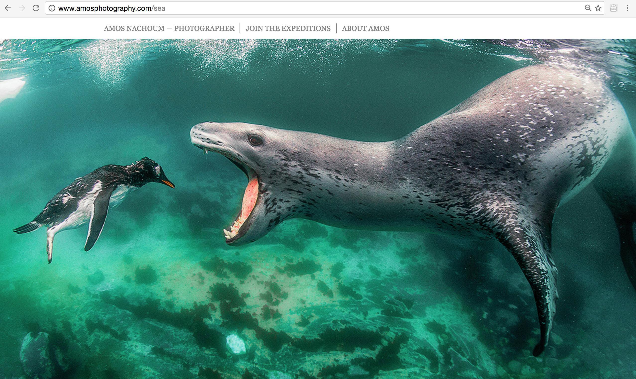 北极熊照片_被北极熊追杀到水下23米是什么样的体验? - 知乎