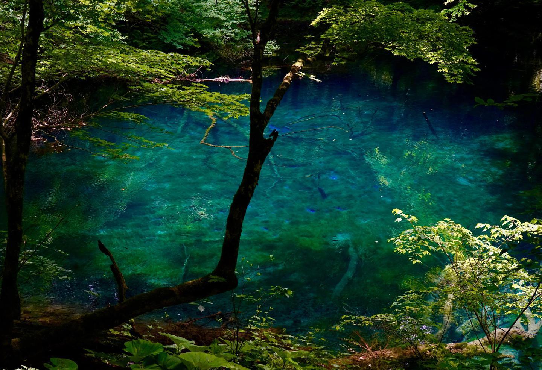 日本的隐秘之森 白神山地十二湖 知乎