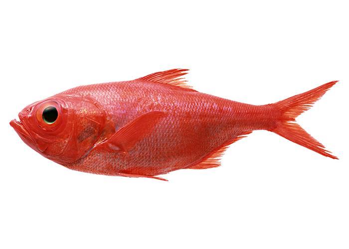 云服务器带外管理的神兵利器:RedFish