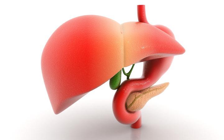 人体bb图_可以保护【肝脏与功能】的10种日常食物 - 知乎