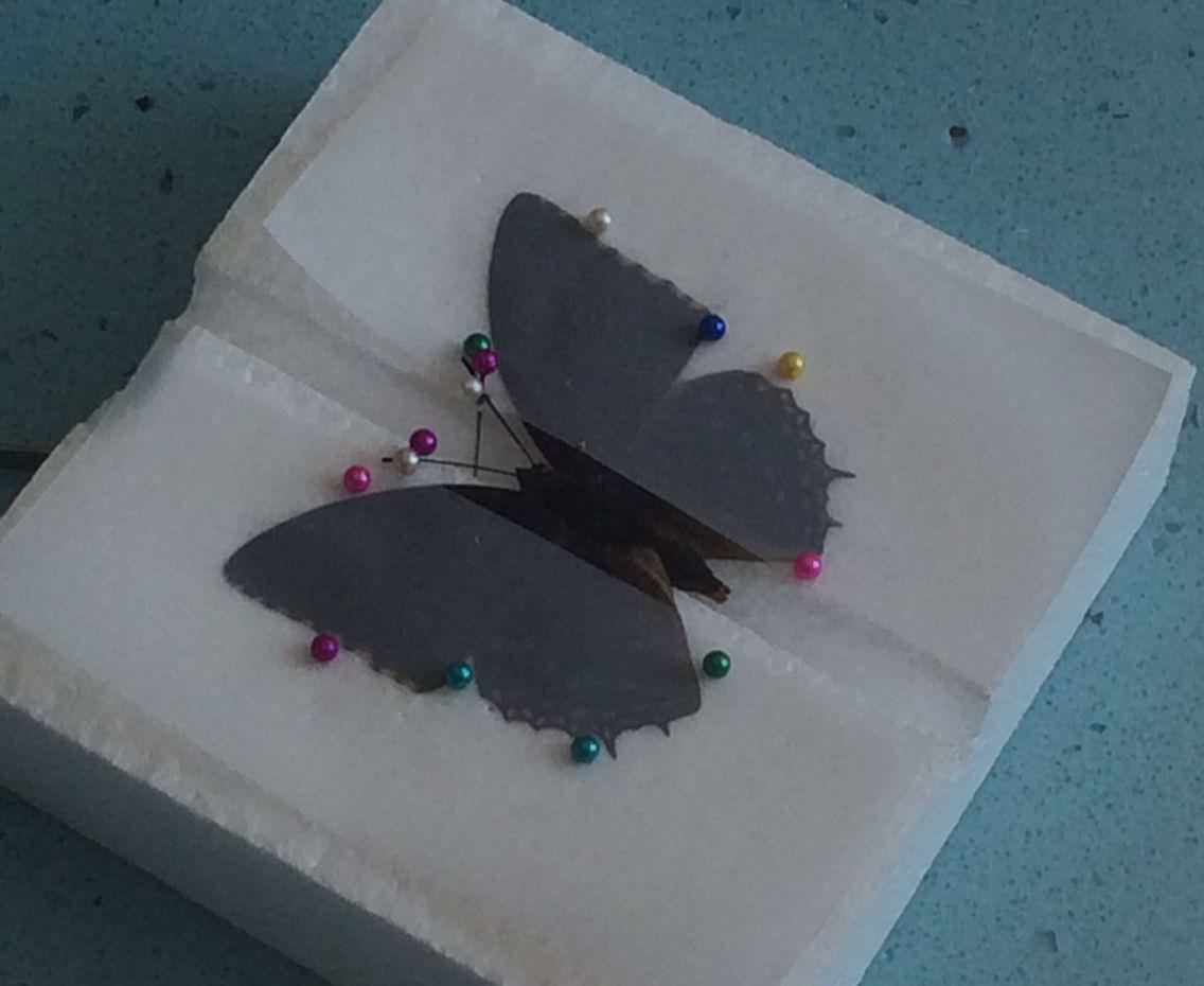蝴蝶的防御