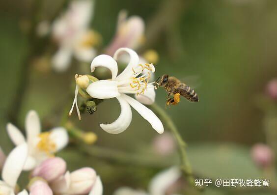 如何由蜜蜂膨胀,如何处理它?
