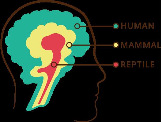 人类有三个大脑? ——有趣的Triune Brain假说