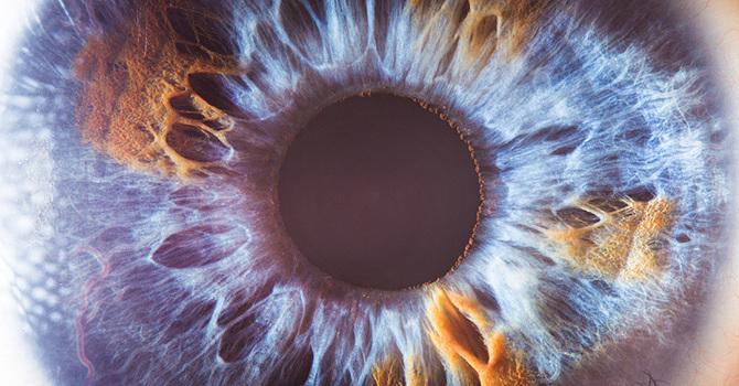 """原来人眼不过是""""残次品"""",或许章鱼的眼睛才真正出自""""上帝之手""""?"""