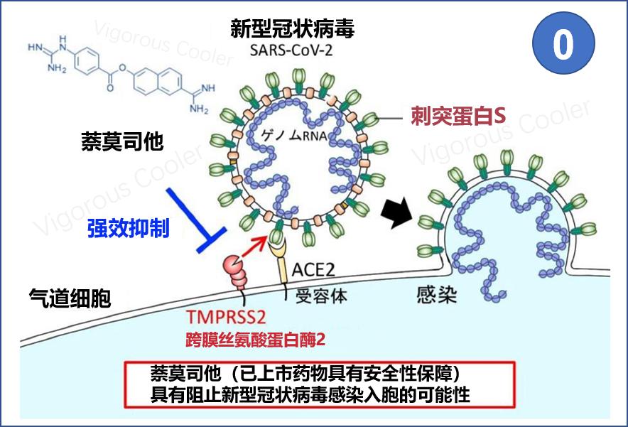 受容 体 ace2