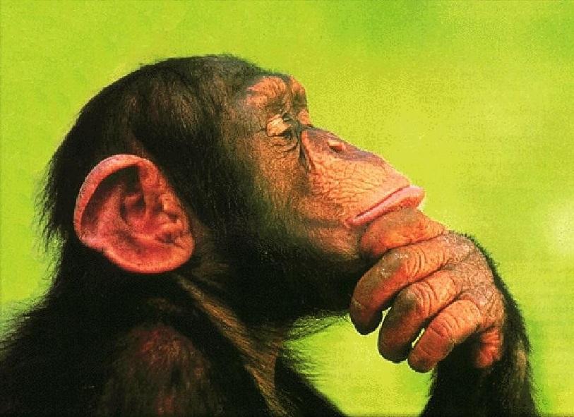 首先,我们来说说学术界一直在争论的一个话题:动物是否有意识?