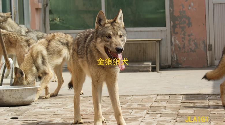 http://imgsrc.baidu.com/forum/w%3D580/sign=8e79bed5faf2b211e42e8546fa816511/e61190ef76c6a7ef505a7080fcfaaf51f3de661c.jpg_《冒险小虎队》怎样不使用解密卡看隐藏内容