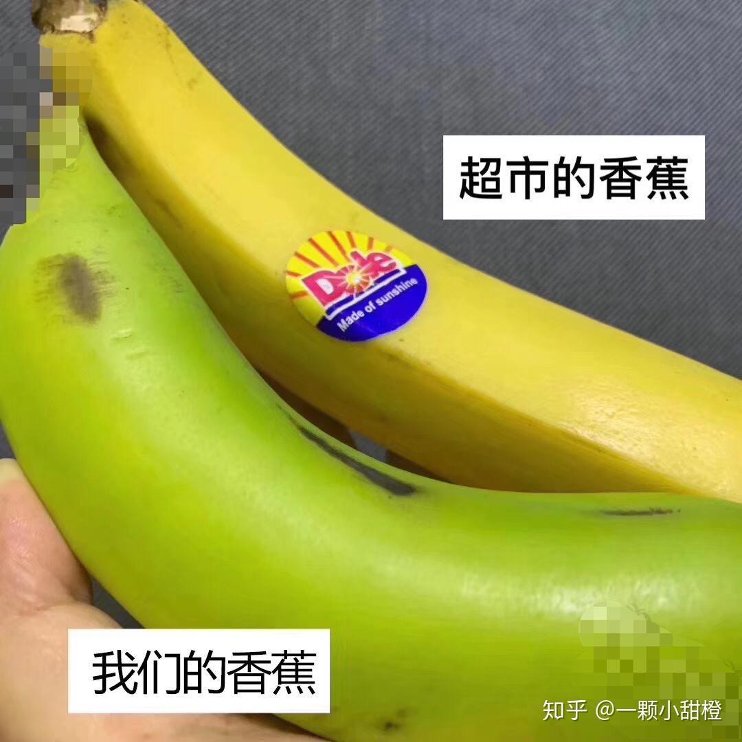 绿皮香蕉能吃不 一种能吃的绿皮香蕉