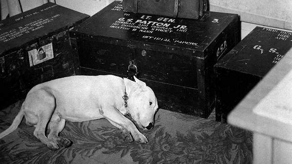 旧影琐忆·巴顿将军的忠犬威利